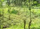 Horana Bare Land for sale/rent