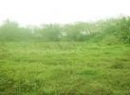 Matale Cultivated Land for sale/rent