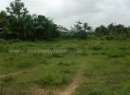 Matale Bare Land for sale/rent