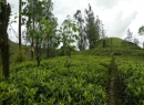 Hatton Tea land for sale/rent
