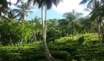 Cultivated Land for sale/rent