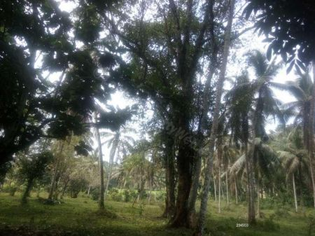 Coconut land for sale in Moragahahena -  Commercial, Industrial, Agricultural Land In Moragahahena