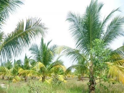 Cultivated-lands for sale in Puttalam district | House lk
