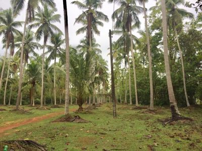 Coconut-lands for sale in Coconut-land district | House lk