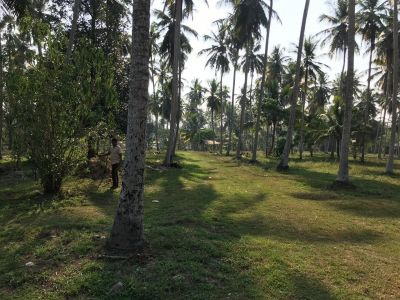 Coconut land for sale in Katunayake - Coconut Land For Sale | 5 Acres