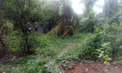 Cultivated Land for sale in Kotadeniyawa - Coconut Land For Sale Around Gampaha!!!