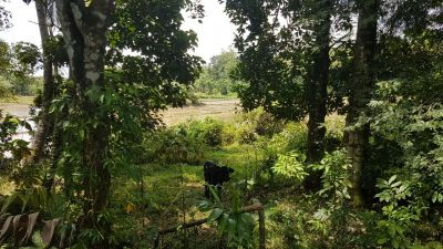 Bare Land for sale in Homagama - 62.25P Land Facing to a Paddy Field in Homagama