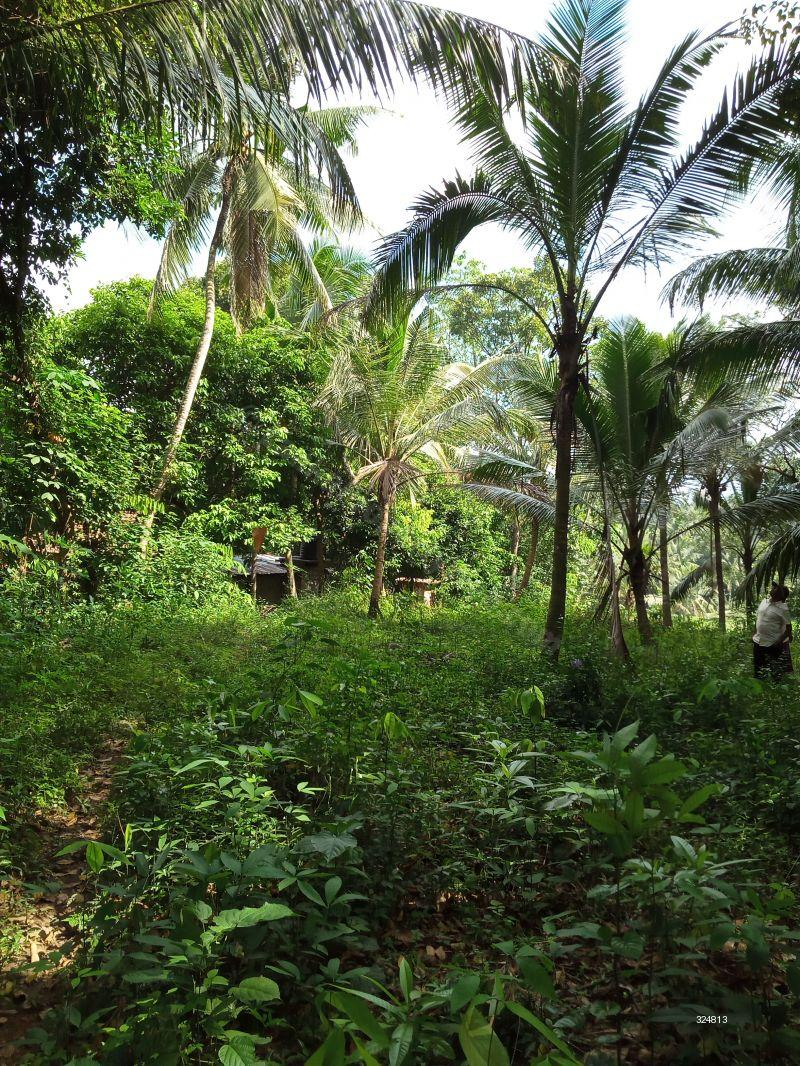 Cultivated Land for sale in Kirindiwela - Land for sale