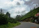 Ratnapura Tea land for sale/rent