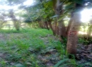 Horana Rubber land for sale/rent